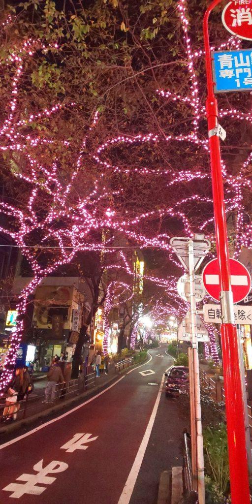 【15日まで】桜丘町のライトアップお見逃しなく!